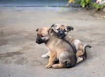 Dois filhotes de cachorro desabrigados imagem de stock
