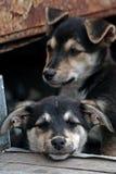 Dois filhotes de cachorro desabrigados tristes. fotos de stock