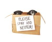 Dois filhotes de cachorro em uma caixa de cartão. imagem de stock