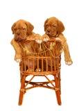 Dois filhotes de cachorro, na poltrona. Fotos de Stock