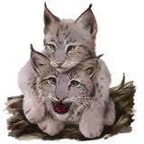 Dois filhotes do lince Desenho da aguarela foto de stock