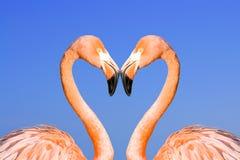 Dois flamingos cor-de-rosa Imagens de Stock