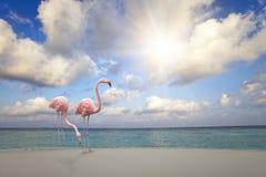 Dois flamingos cor-de-rosa no Sandy Beach pelo mar azul sob o céu com o sol através das nuvens foto de stock