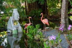 Dois flamingos nas Caraíbas fotos de stock