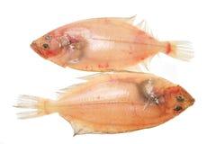 Dois flatfish imagens de stock royalty free
