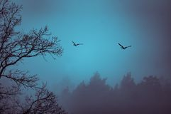 Dois gansos, sillhoutte da árvore, tonificação da separação azulada Fotografia de Stock Royalty Free