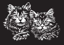 Dois gatinhos Imagens de Stock
