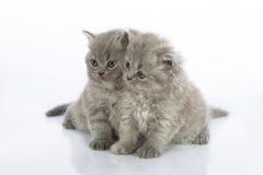 Dois gatinhos bonitos Imagens de Stock Royalty Free
