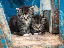 Dois gatinhos bonitos Fotografia de Stock Royalty Free