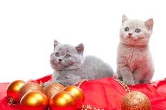 Dois gatinhos britânicos com decoração Fotos de Stock