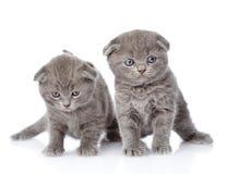 Dois gatinhos britânicos do shorthair Isolado no fundo branco Fotos de Stock Royalty Free