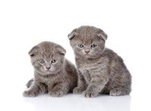 Dois gatinhos britânicos do shorthair que loking na câmera Isolado Imagem de Stock Royalty Free