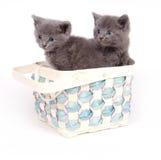 Dois gatinhos cinzentos em uma cesta Foto de Stock Royalty Free