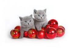 Dois gatinhos com esferas do Natal Fotos de Stock Royalty Free