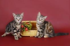 Dois gatinhos com uma cesta das flores. Imagens de Stock