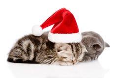 Dois gatinhos do sono com chapéu de Santa Isolado no branco Imagens de Stock Royalty Free