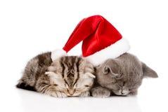 Dois gatinhos do sono com chapéu de Santa Isolado no fundo branco Fotografia de Stock Royalty Free