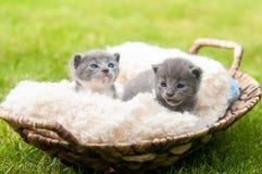 Dois gatinhos do sweety Imagens de Stock Royalty Free