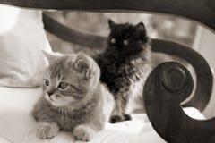 Dois gatinhos em uma cadeira fotografia de stock royalty free