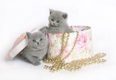 Dois gatinhos em uma caixa. Imagem de Stock
