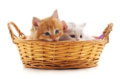 Dois gatinhos em uma cesta Imagens de Stock