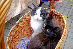 Dois gatinhos em uma cesta Fotos de Stock