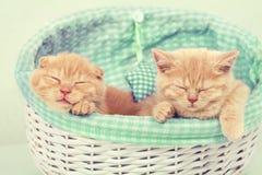 Dois gatinhos em uma cesta Foto de Stock Royalty Free