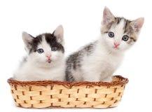 Dois gatinhos em uma cesta em um fundo branco Foto de Stock