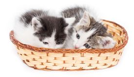 Dois gatinhos em uma cesta em um fundo branco Imagem de Stock