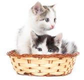 Dois gatinhos em uma cesta em um fundo branco Imagens de Stock