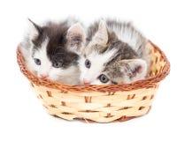 Dois gatinhos em uma cesta em um fundo branco Fotografia de Stock