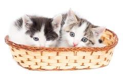 Dois gatinhos em uma cesta em um fundo branco Fotografia de Stock Royalty Free
