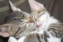 Dois gatinhos listrados Foto de Stock