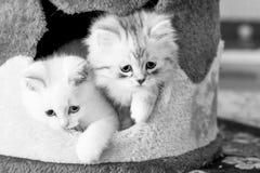 Dois gatinhos na casa Foto de Stock Royalty Free