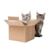 Dois gatinhos pequenos Imagem de Stock Royalty Free