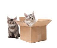 Dois gatinhos pequenos Fotos de Stock