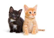 Dois gatinhos pequenos Foto de Stock Royalty Free