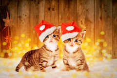 Dois gatinhos pequenos que sentam-se na neve com deco do Natal Fotos de Stock Royalty Free