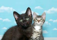 Dois gatinhos que olham o visor, fundo do céu Imagens de Stock