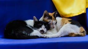 Dois gatos Imagens de Stock