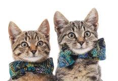 Dois gatos Fotografia de Stock Royalty Free