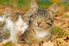 Dois gatos Foto de Stock