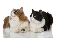 Dois gatos fotos de stock royalty free