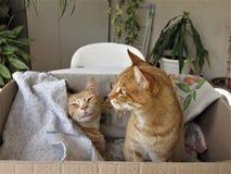 Dois gatos agradáveis fotos de stock