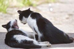 Dois gatos amigáveis que beijam no dia de verão Fotos de Stock Royalty Free