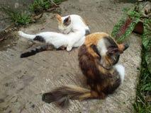 Dois gatos bonitos imagens de stock royalty free