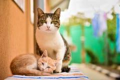 Dois gatos bonitos Imagem de Stock Royalty Free