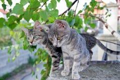Dois gatos cinzentos sobre as folhas verdes Imagens de Stock