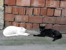 Dois gatos da rua, branco e preto, descanso exterior no asfalto foto de stock