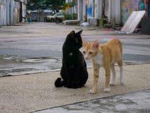 Dois gatos dispersos no backstreet imagens de stock
